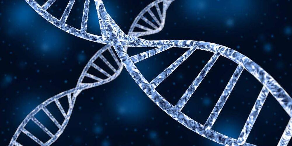 What Does DNA and RNA Stand for