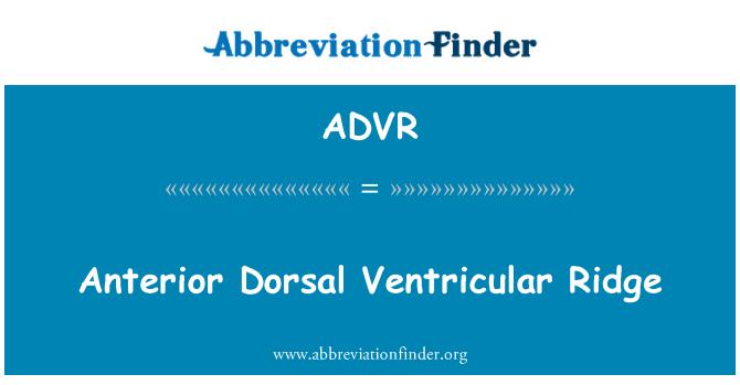 ADVR: Permatang ventrikular bahagian anterior