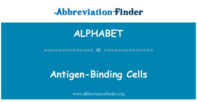 ALPHABET: Células de antígeno-enlace