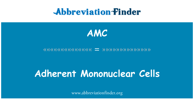 AMC: Adherent Mononuclear Cells
