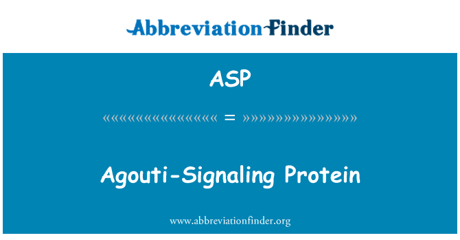 ASP: Proteína de señalización Agouti