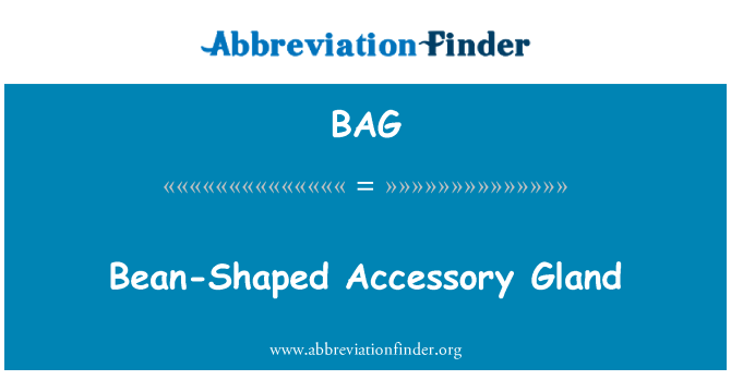 BAG: Bean-Shaped Accessory Gland