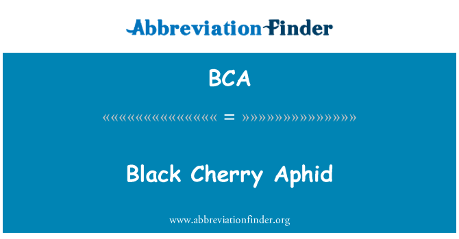 BCA: Black Cherry Aphid