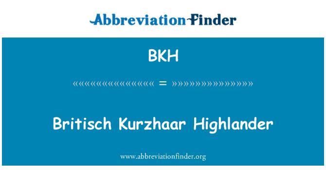 BKH: Britisch Kurzhaar Highlander
