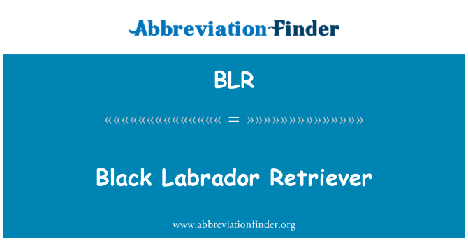 BLR: Black Labrador Retriever