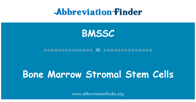 BMSSC: Bone Marrow Stromal Stem Cells