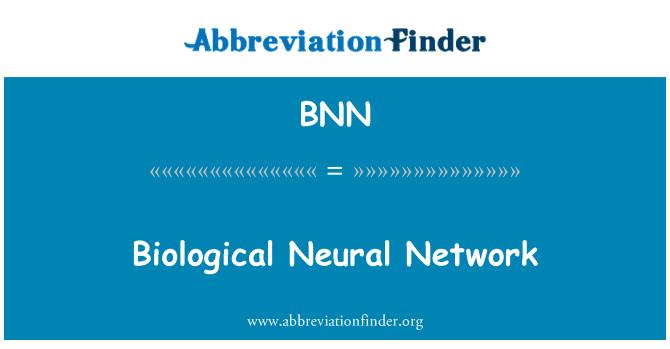 BNN: Biological Neural Network