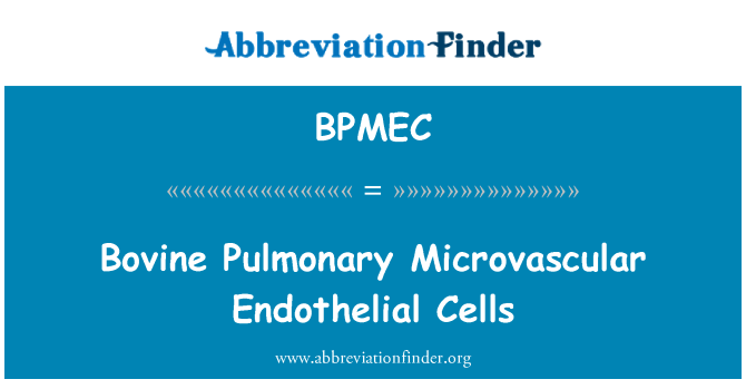 BPMEC: Bovine Pulmonary Microvascular Endothelial Cells