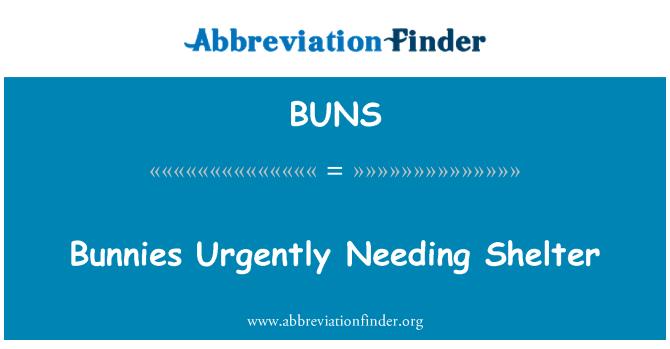 BUNS: Bunnies acilen ihtiyaç duyan barınak