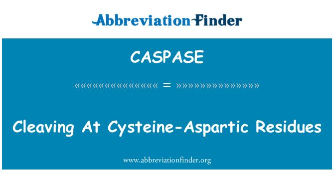 CASPASE: 半胱氨酸-天冬氨酸残留在劈裂