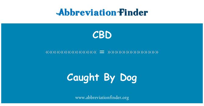 CBD: Уловени от куче