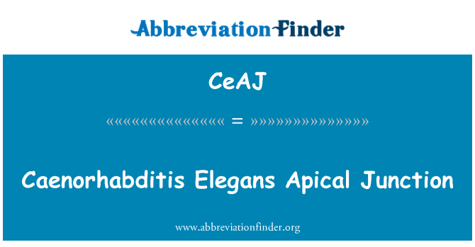 CeAJ: Caenorhabditis Elegans Apical Junction