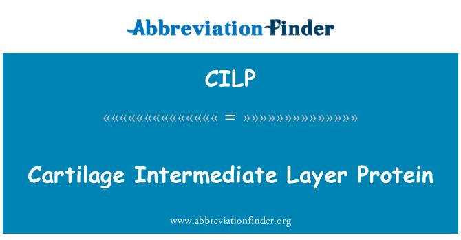 CILP: Rawan lapisan pertengahan Protein