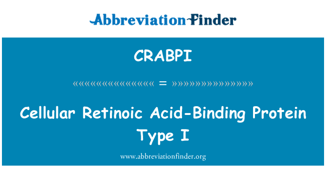 CRABPI: Cellular Retinoic Acid-Binding Protein Type I
