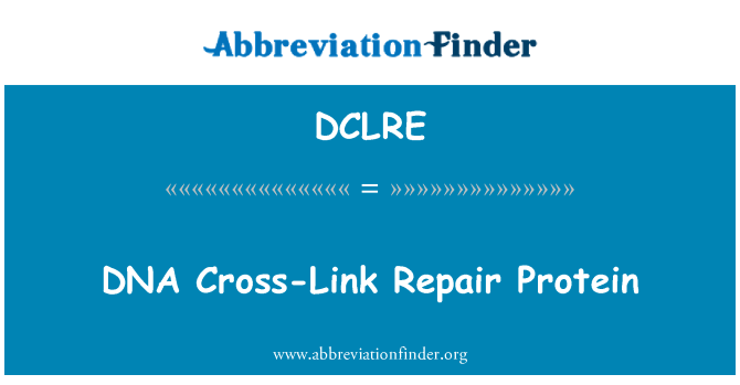 DCLRE: DNA Cross-Link Repair Protein