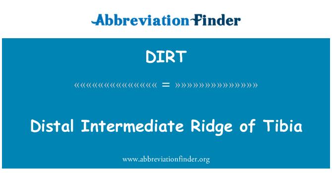 DIRT: Distal Intermediate Ridge of Tibia