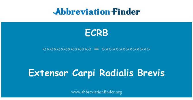 ECRB: 桡侧伸腕短