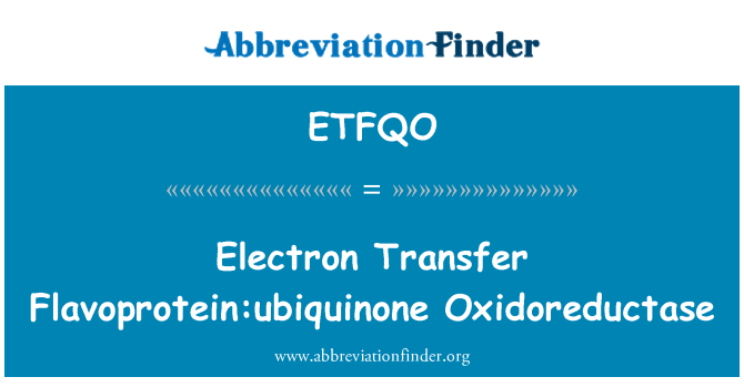 ETFQO: Electron Transfer Flavoprotein:ubiquinone Oxidoreductase