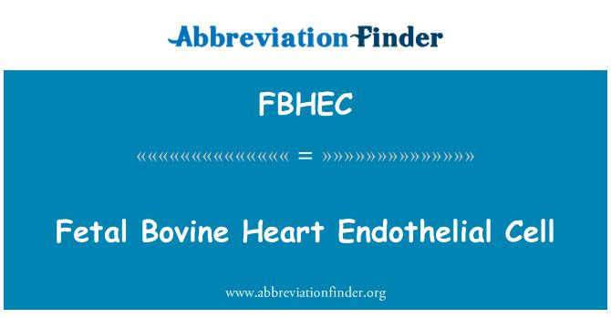 FBHEC: Fetal Bovine Heart Endothelial Cell