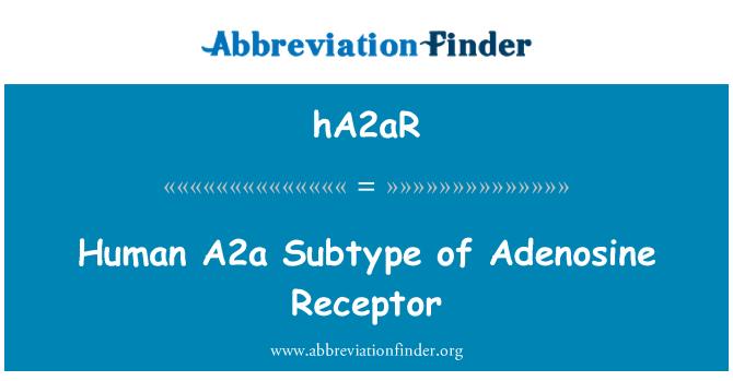 hA2aR: Human A2a Subtype of Adenosine Receptor