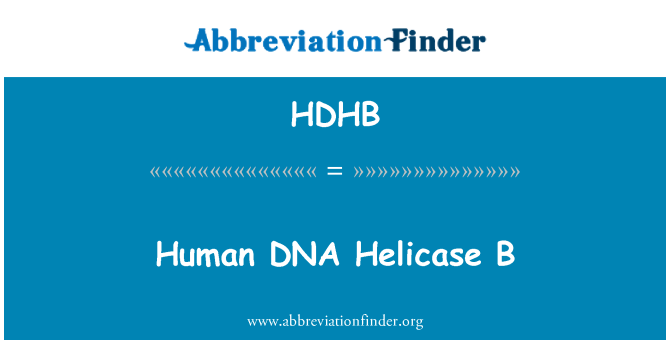 HDHB: Human DNA Helicase B