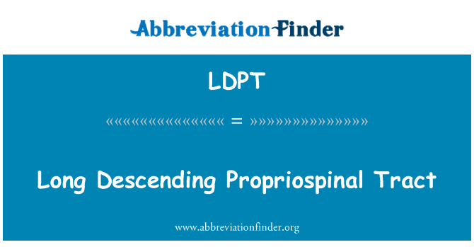 LDPT: Long Descending Propriospinal Tract