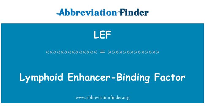 LEF: Lymphoid Enhancer-Binding Factor