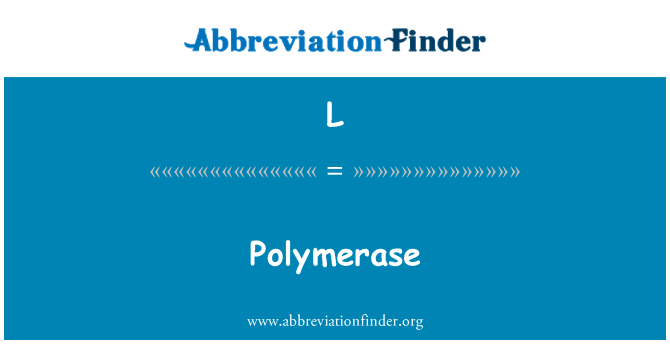 L: Polümeraasi