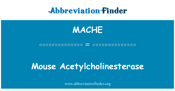 MACHE: Mouse Acetylcholinesterase