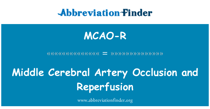 MCAO-R: Middle Cerebral Artery Occlusion and Reperfusion