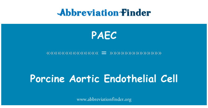 PAEC: Porcine Aortic Endothelial bimbit