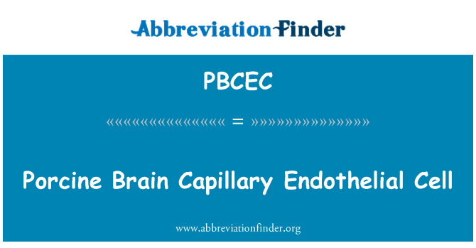 PBCEC: Porcine Brain Capillary Endothelial Cell