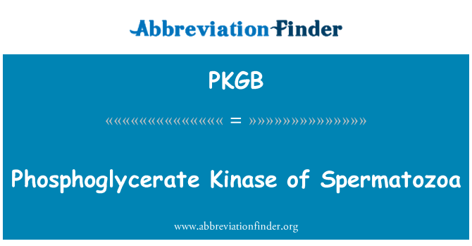 PKGB: Photphoglyxerat Kinase Spermatozoa