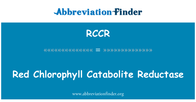 RCCR: Red Chlorophyll Catabolite Reductase