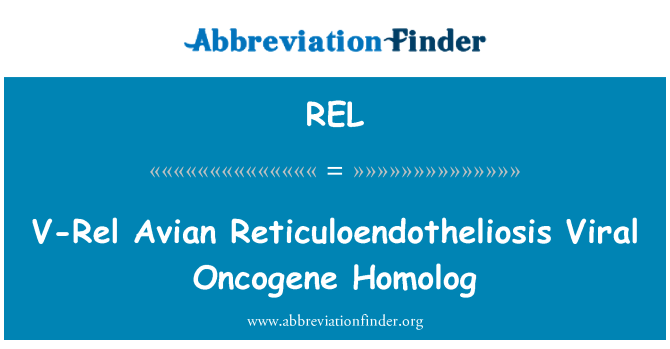 REL: V-Rel Avian Reticuloendotheliosis Viral Oncogene Homolog