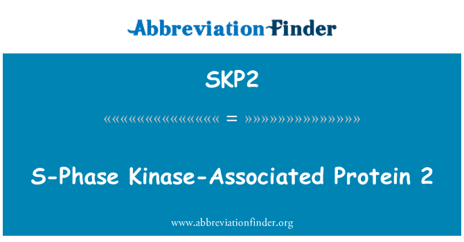 SKP2: S-Phase Kinase-Associated Protein 2