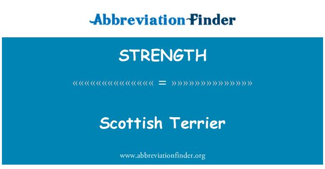 STRENGTH: Škotų terjeras