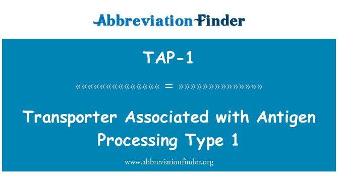 TAP-1: Transporter Associated with Antigen Processing Type 1