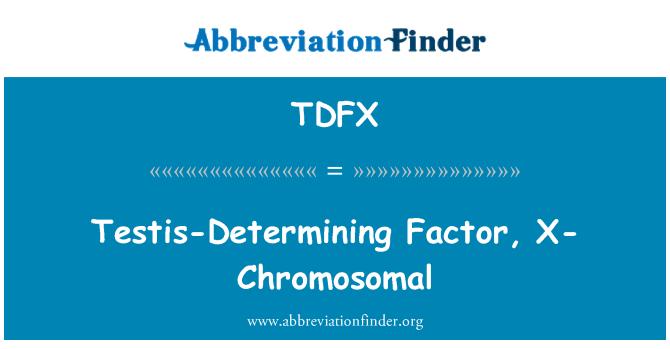 TDFX: Factor determinante testicular, x-cromosómico