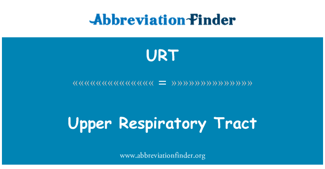 URT: Upper Respiratory Tract