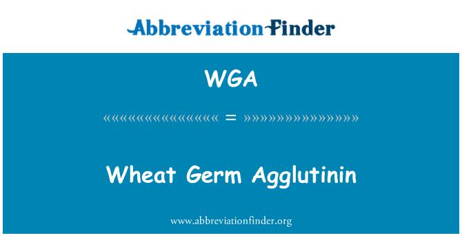 WGA: Wheat Germ Agglutinin