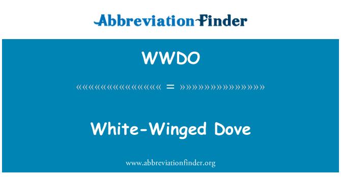 WWDO: Beyaz - kanatlı güvercin