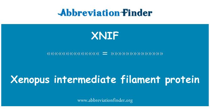 XNIF: Xenopus intermediate filament protein