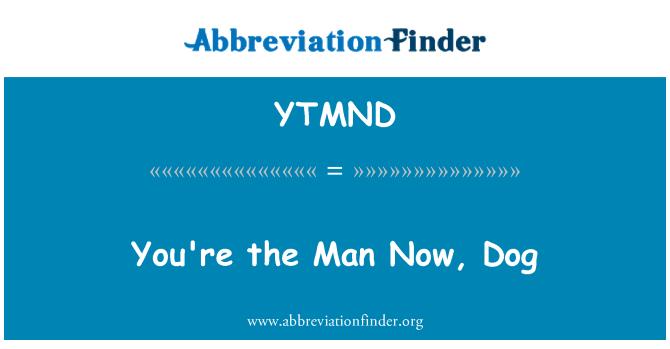 YTMND: Kau lelaki sekarang, anjing