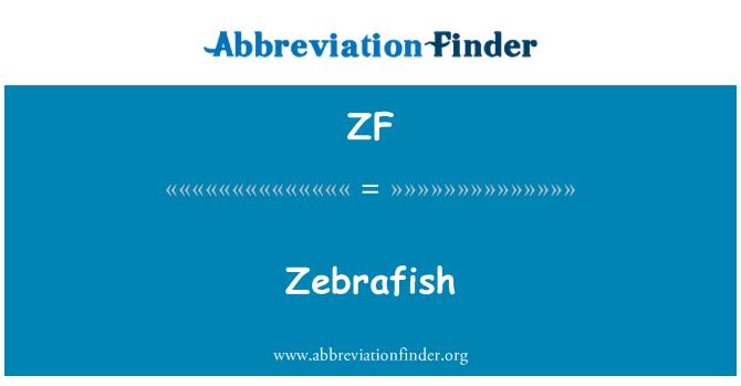 ZF: Zebrafish